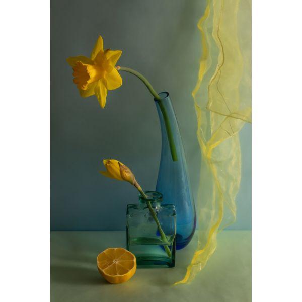 """Aušros Pečiūrienės Foto Paveikslas ant drobės """"Narcizai"""""""